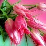 Дорогі жінки, поздоровляємо вас з 8 березня!